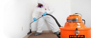 Mold Removal Tech